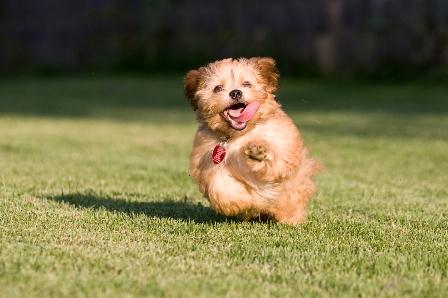 Puppy-Running.ashx_.jpg
